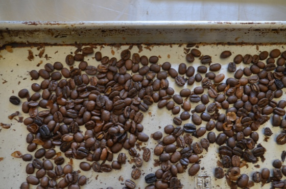 Roasted beans on cooling tray at the Zane Grey Estate