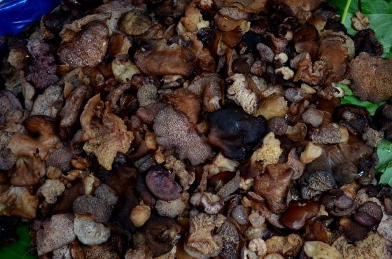 House of Haos Xishuangbanna Yunnan farmers market wood ear mushroom