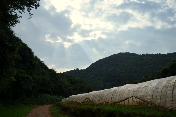 House of Haos Kunming Yunnan Haobao Organic Farm Greenhouse