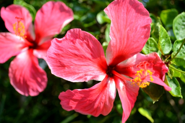 House of Haos Xishuangbanna Jinghong Tropical Botanical Gardens Flower 1
