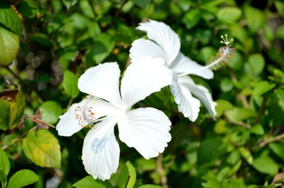 House of Haos Xishuangbanna Jinghong Tropical Botanical Gardens Flower 8