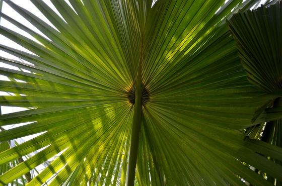 House of Haos Xishuangbanna Jinghong Tropical Botanical Gardens Palm Frond