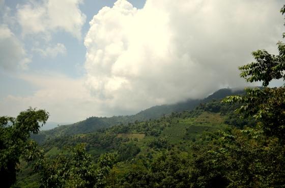 House of Haos Yunnan Puer Tea Hike Clouds