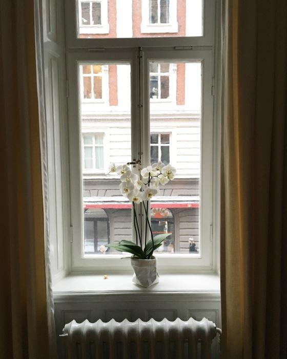 Orchid in Kungsholmen, Stockholm Sweden